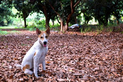 Puppy in the garden sitting on dry leaves Royalty Free Stock Photo