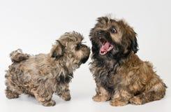 Puppy gekleurd schoothondje stock afbeeldingen