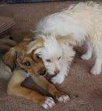 Puppy geknuffel Stock Afbeelding