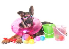 Puppy german shepherd in summer Stock Images