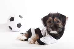 Puppy with Germany jersey Stock Images