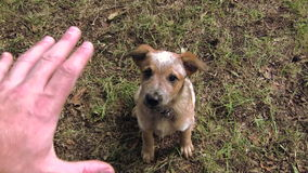 Puppy Getting Treat After Sitting