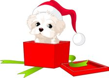 Puppy gift. A cute puppy wrapped up in a box like a Christmas gift royalty free illustration