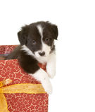 Puppy in a gift Stock Image