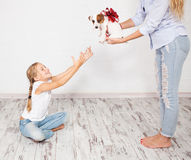 Puppy gift Stock Images