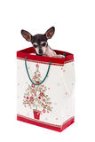 Puppy in gift bag. Christmas gift. White background Royalty Free Stock Photography