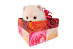 Puppy in gift box Royalty Free Stock Photos