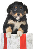 Puppy and gift box Stock Photo