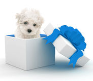 Puppy in Gift Box Stock Image