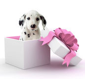 Puppy in Gift Box Stock Photography