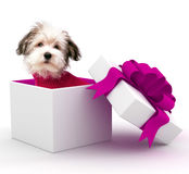 Puppy in Gift Box Stock Images