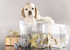Puppy and gifts Stock Photo