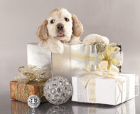 Puppy and gifts. American Cocker Spaniel puppy and gifts christmas Royalty Free Stock Photos