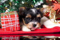 Puppy  and  gifts Stock Images