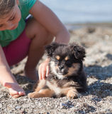 Puppy and girl Royalty Free Stock Image