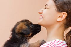 Puppy is giving a kiss to its girl owner stock photo