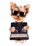 Puppy with glasses holding case with money Stock Images