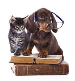 Puppy in glasses   and kitten Royalty Free Stock Image
