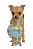 Puppy with globe Royalty Free Stock Photos