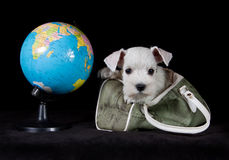 Puppy with globe and bag Stock Photography