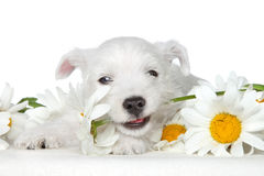 Puppy gnawing flower Stock Photo