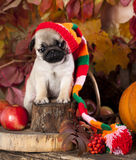 Puppy in gnome hat Royalty Free Stock Photos