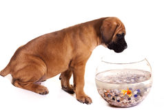 Puppy goes fishing Stock Photos