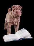 Puppy is going to read royalty free stock photography