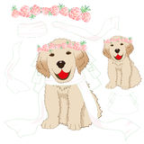 Puppy Golden Retriever Bride with Crown Pink Rose Flower, White Veil. Baby Dog Labrador Valentine Day. Vector Illustration. Royalty Free Stock Photos