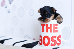 The puppy got into a cup. Small a doggie I got into a cup Royalty Free Stock Images