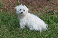 Puppy in gras Royalty-vrije Stock Foto