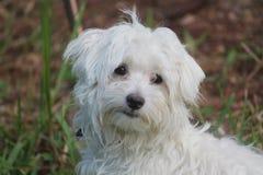 Puppy in gras Stock Foto