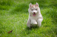 Puppy on grass Stock Photos
