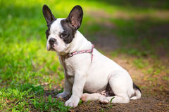 Puppy on the grass Stock Photos