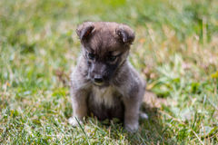 Puppy on grass Stock Image