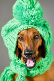 Puppy in groen Stock Afbeelding
