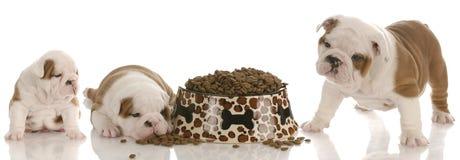 Puppy growth Stock Photo