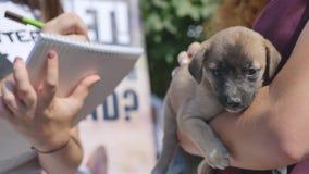 Puppy in haar wees van het wapenspuppy stock footage