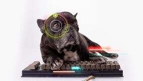 Puppy hacker with computer keyboard