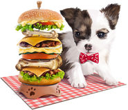 Puppy & hamburger painting. Puppy and a large portion of hamburger Royalty Free Stock Images