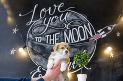 Puppy in hands on star picture background.  Stock Photos