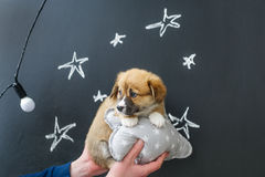 Puppy in hands on star picture background.  Stock Images