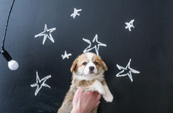 Puppy in hands on star picture background.  Royalty Free Stock Photo