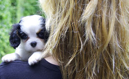 Puppy hanging over schoulder Royalty Free Stock Photography
