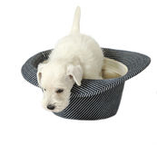 Puppy in a hat Stock Photos