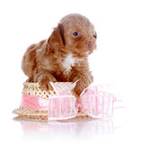 Puppy with a hat with a bow. Royalty Free Stock Images