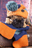Puppy in hat hand-knitted. French bulldog puppy in hat hand-knitted Royalty Free Stock Photography