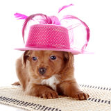 Puppy in a hat on a rug. Royalty Free Stock Photography