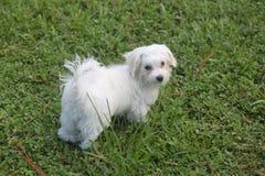 Puppy in het Gras Royalty-vrije Stock Foto's