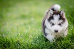 Puppy in het gras met copyspace Stock Afbeeldingen